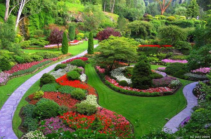 Thiết kế tiểu cảnh sân vườn 57