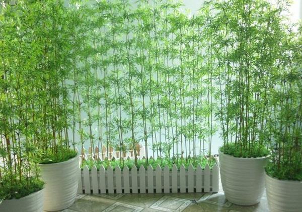 Cây trồng ban công chịu nắng