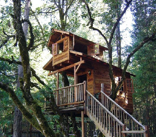 Mô hình homestay trên cây